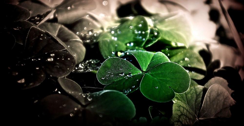 lucky_luck1