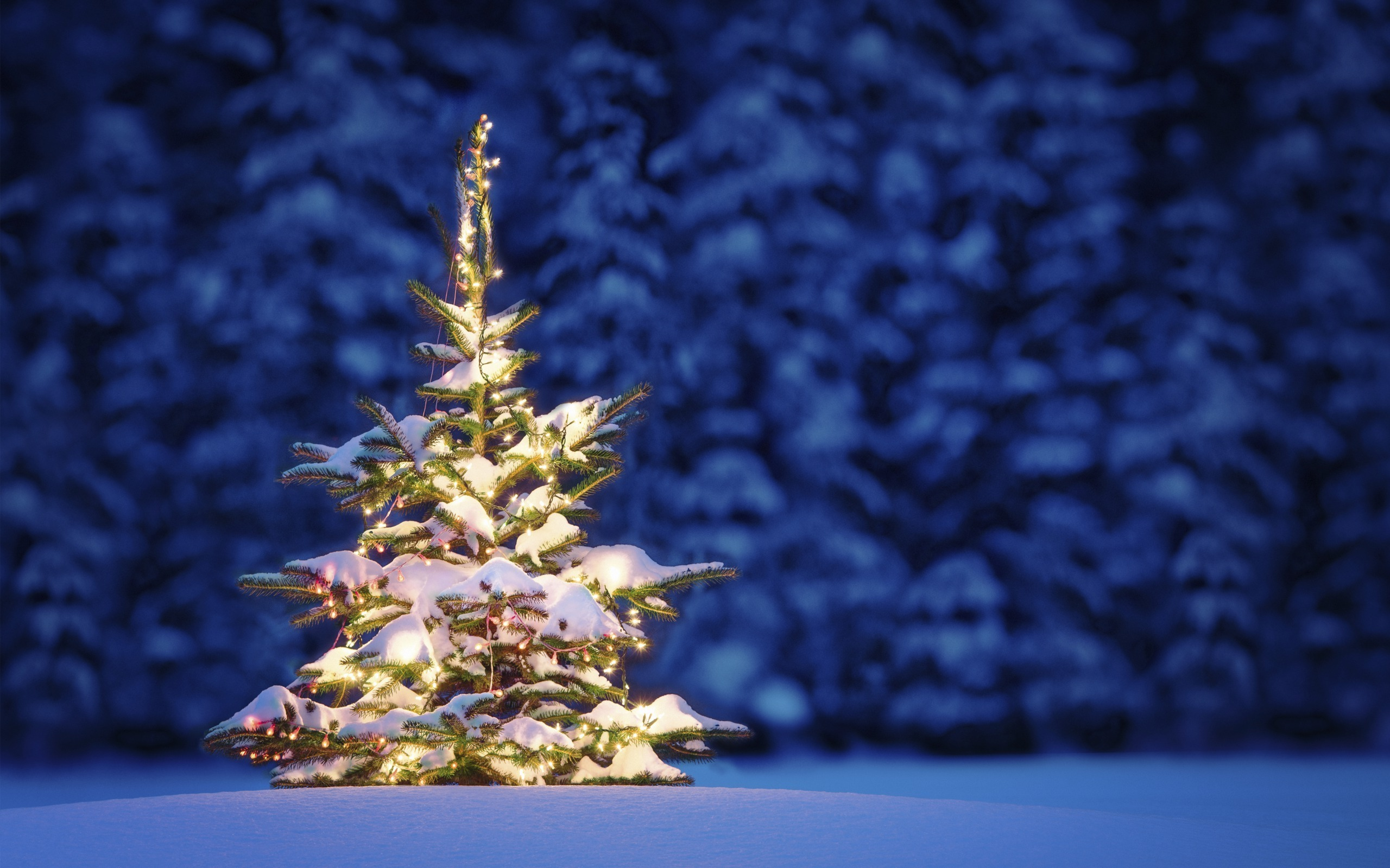 Christmas Tree Snow.Christmas Tree Snow Wallpaper 3 Ryan Millar